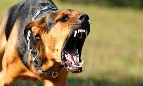 Фото Сонник укусила бешеная собака