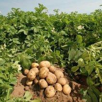 Разбираемся, к чему приснился картофель