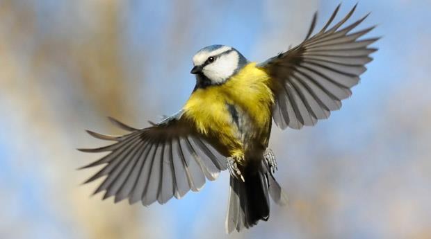К чему снятся птицы