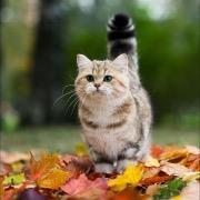 Кот в осенних листьях