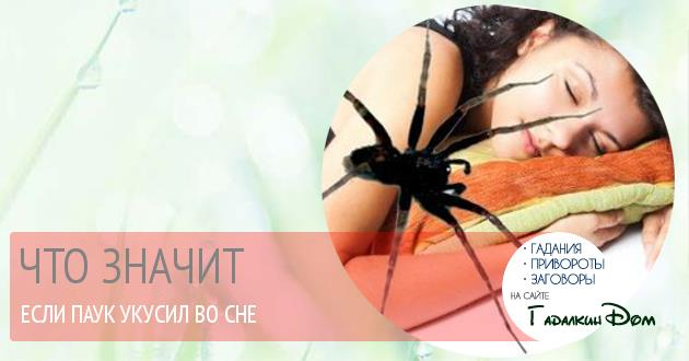 Если во сне вас укусил паук, вам придется пережить разочарование в какой-то сфере жизни.