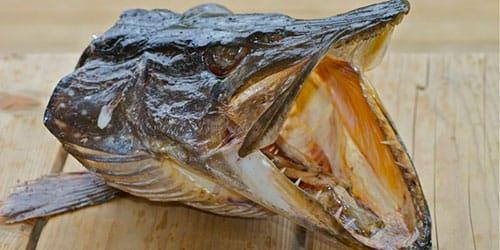 К чему беременной снится рыба без головы 15
