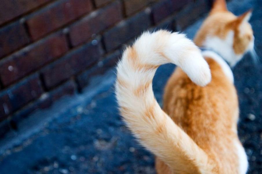 К чему снится кошачий хвост фото