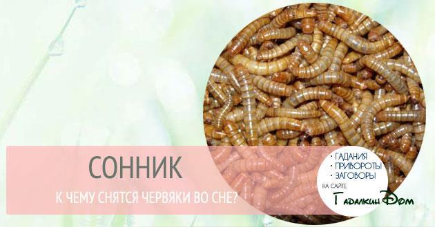 К чему снятся черви глисты – сонник: глисты, черви во сне - свидетельствует о том, что в ближайшее время вы раскроете замыслы ваших врагов против вас.