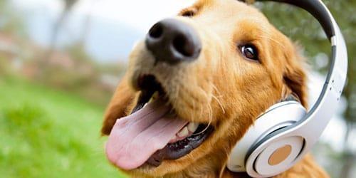 сонник говорящая собака