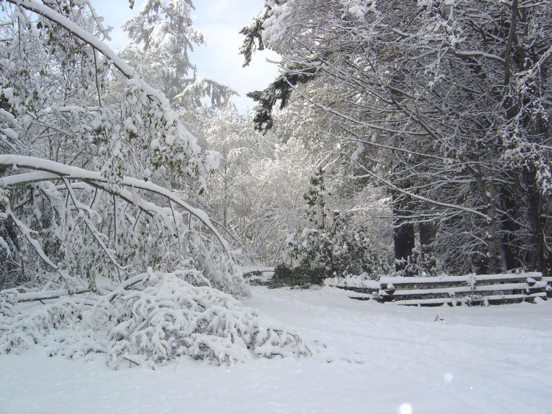 Сонник трактует чистый, только что выпавший белый снег — как предвестие каких-то дальних странствий, увеличения ваших доходов, внушительные финансовые поступления.