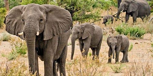к чему снится слоник