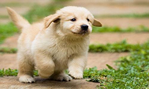 Фото Сонник собака далматинец