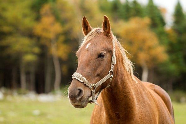 К чему снится преследующая лошадь фото
