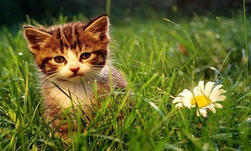 К чему снится завести котенка во сне фото