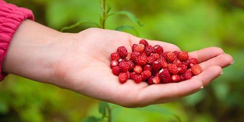 ягоды в руке