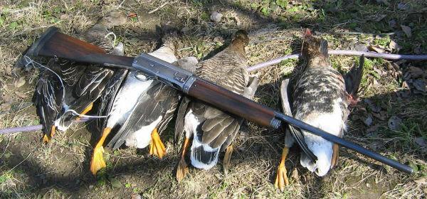 к чему снится ружье охота