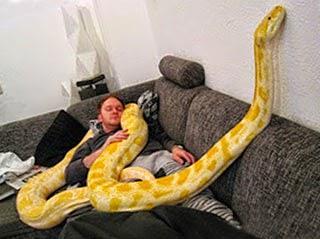 К чему снится серая змея женщине