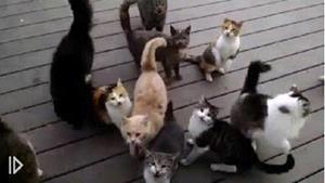 Кошки орут под окном