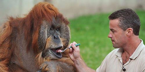 кормить обезьяну