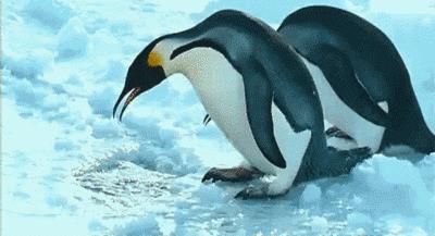 к чему снится пингвин