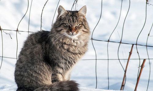 К чему снится найти кота фото