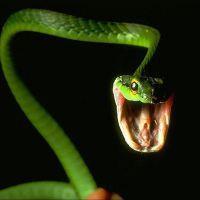 к чему снится укус змеи за ногу