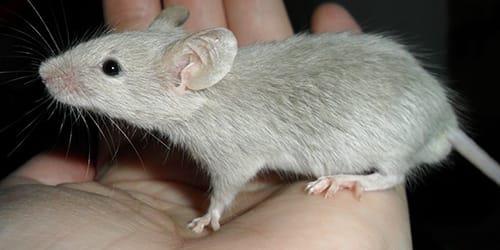 мышь укусила во сне