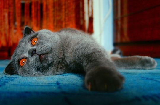К чему снятся кошки – толкование снов по всем сонникам