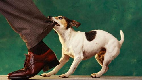 к чему снится что укусила собака без крови