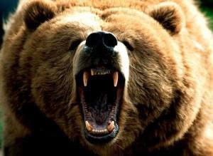 Медведь открыл пасть