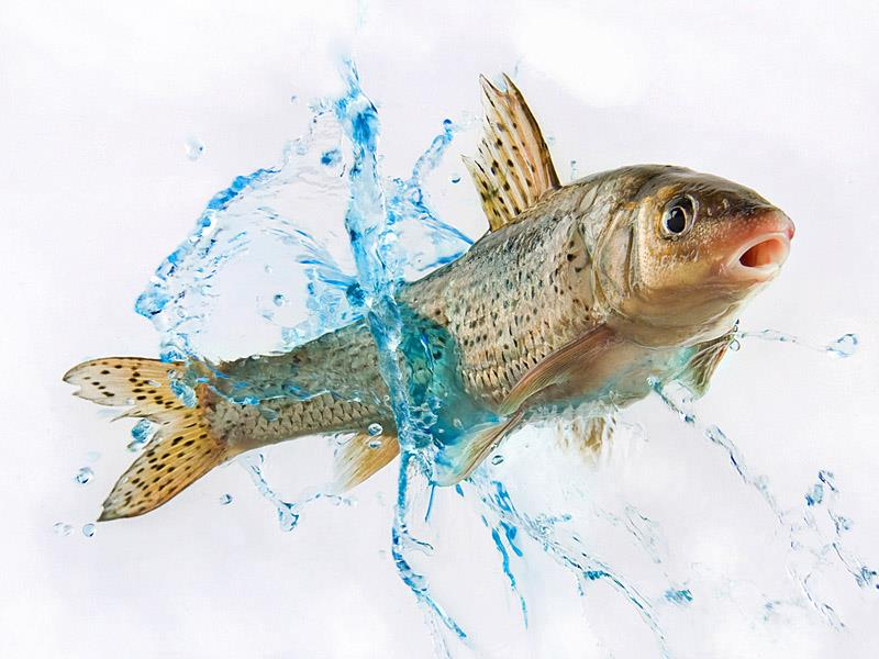 К чему снится рыба в грязи фото