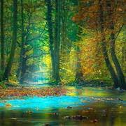 К чему снится чистый лес фото