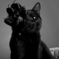 видеть во сне черного кота
