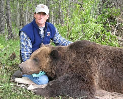 Больной медведь