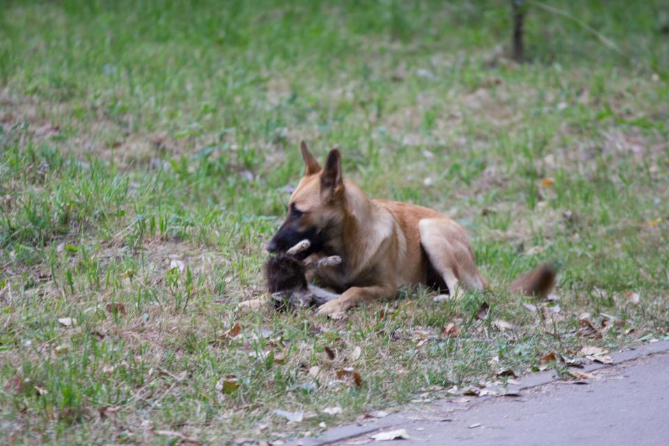 Фото Сонник собака съела котенка
