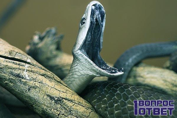 Фото К чему снятся мертвые змеи женщине
