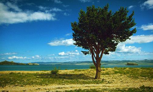 К чему снится трухлявое дерево фото