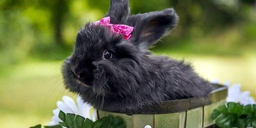 большой черный кролик