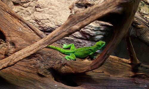 Укус ящерицы во сне фото