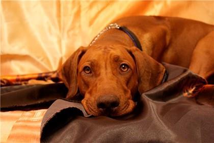 Сонник собака грустная фото