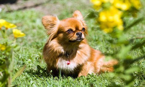 Фото Сонник собака грустная