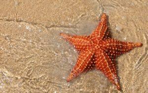 К чему снится морская звезда фото