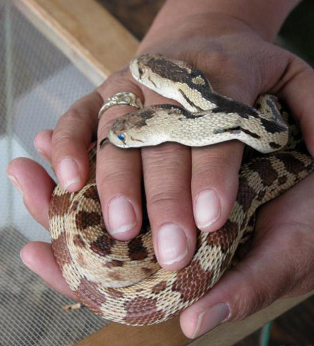 Приснилось, что змея напала, а потом буквально окаменела?