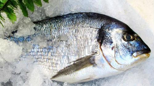 замороженная рыба во сне