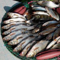 сон много рыбы в воде