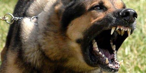 Фото Сонник напала черная собака
