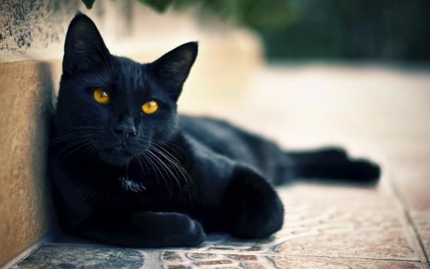 12-сонник кошка