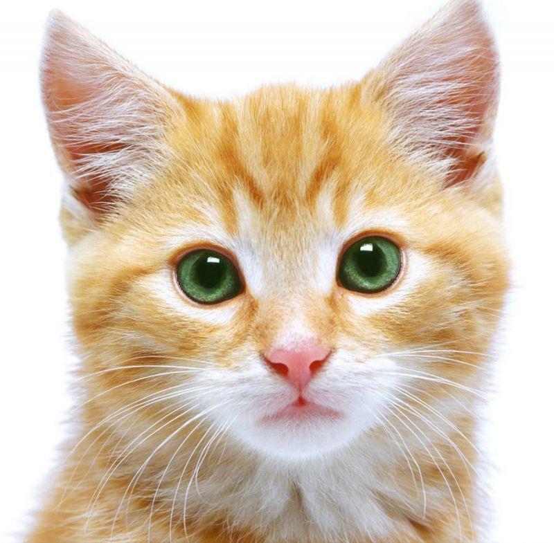 12-к чему снится кошка