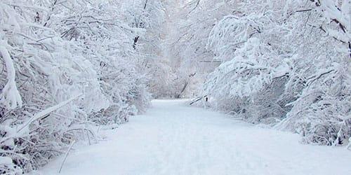 сонник белый снег