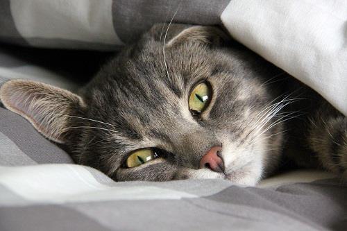 Приснился кот которого нет в живых