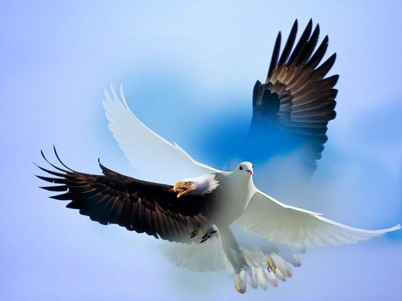 К чему сниться голубь?