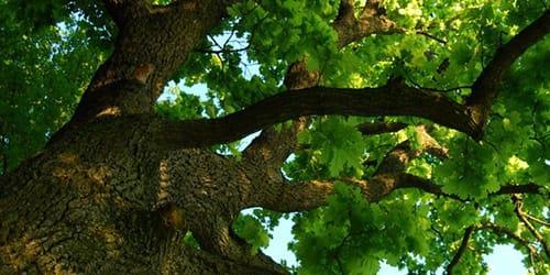 упасть с высокого дерева