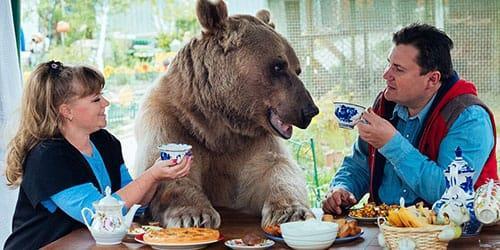 бурая медведица