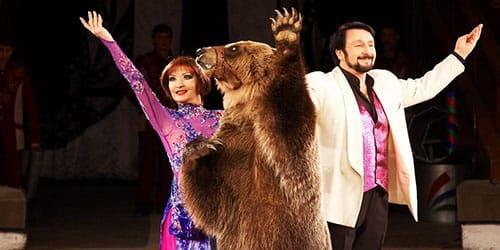 медведица в цирке